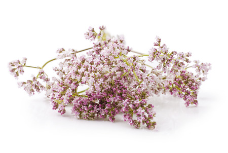 Valerian herb flower sprigs on a white background Stock Photo