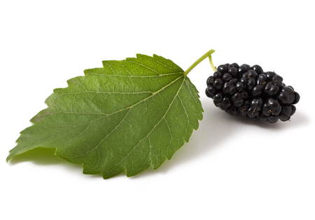 Ripe fresh Mulberry on a white background