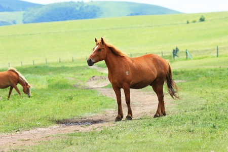 horse on meadow photo