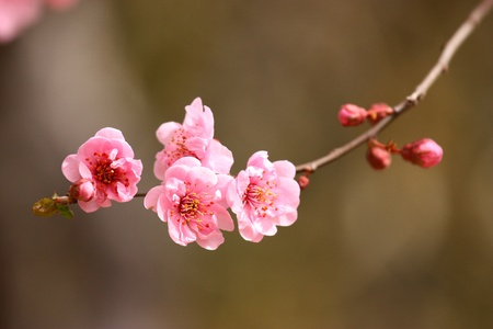 Beautiful blossom peach flowers at background of water photo