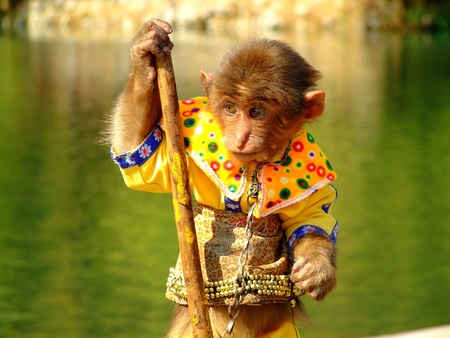 ringside: A monkey like the sunwukong