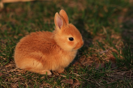 the bunny in the meadow