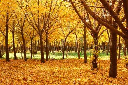 dode bladeren: gloden vertrekt om de herfst