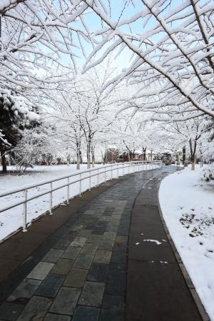 landscape of snow in winter