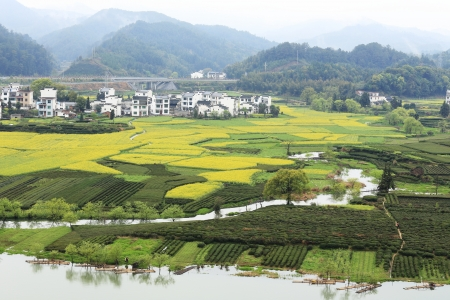 chinese village in spring with rape flower