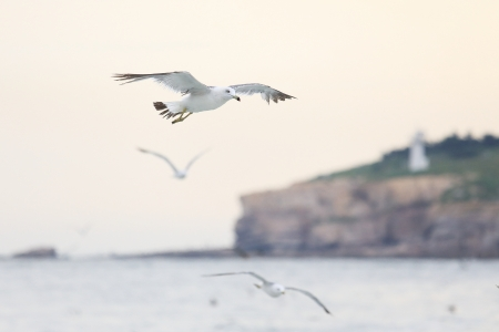 seagull fly on the sea photo