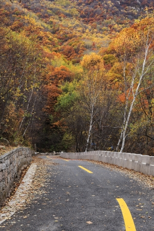 The red  leafs and a road