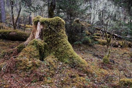 Tree stump covered with plants in the nature