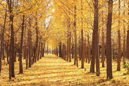 gloden leaves at autumn photo