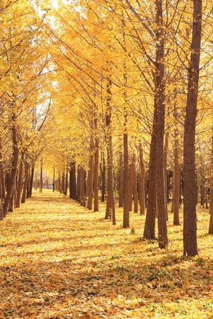 gloden leaves at autumn 免版税图像