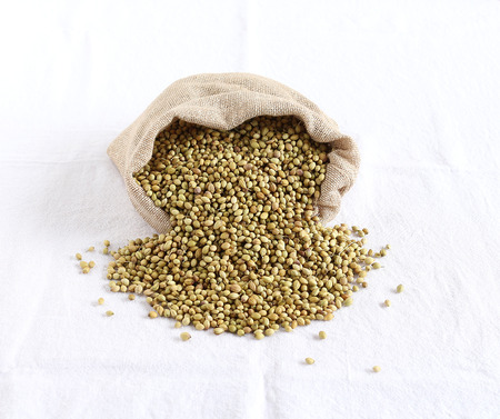 Healthy food coriander seeds in a sack.