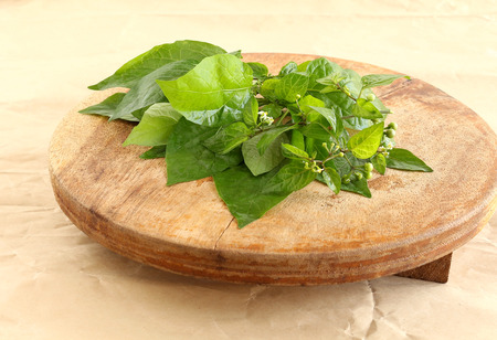 Garden nightshade leaves, which are said to have medicinal values, on a wooden table.
