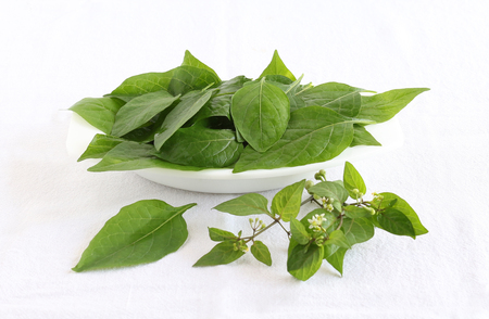 Garden nightshade leaves, which are said to have medicinal values, in a bowl