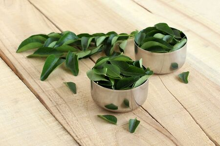Curry leaves, which are a healthy ingredient used in tempering for Indian food like sambar, rasam and curries, and also as a flavoring agent, and their twigs. Imagens