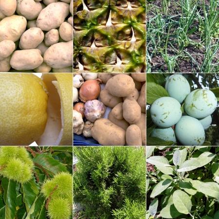 imágenes de varias frutas Foto de archivo - 22454785