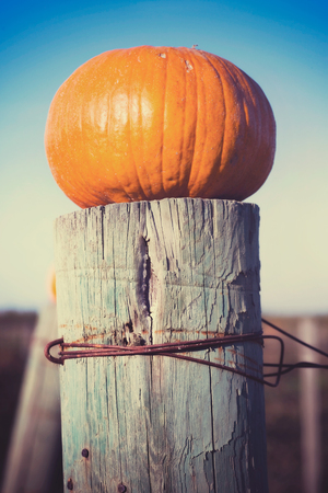 fencepost: Pumpkin on an old weathered fencepost. Stock Photo