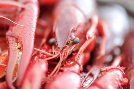 marco: Marco crayfish