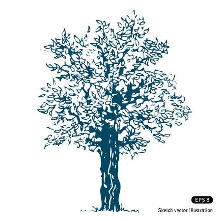 tree sketch:   Tree. Isolated. Hand drawn isolated on white Illustration