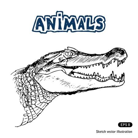 Alligator. Hand drawn Vector