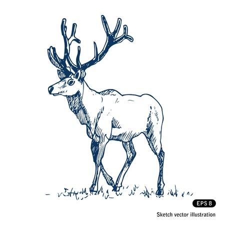 alces alces: Mano Deer dibujados aislado en blanco Vectores