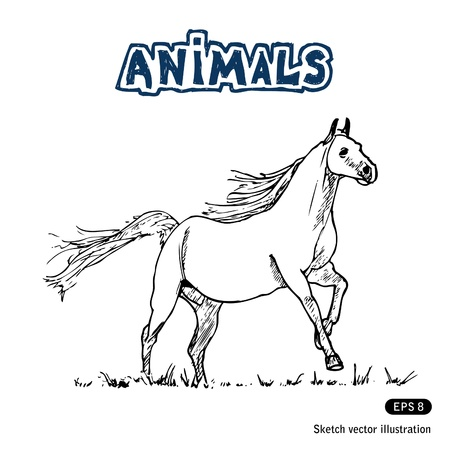 Horse  Hand drawn isolated on white Vector