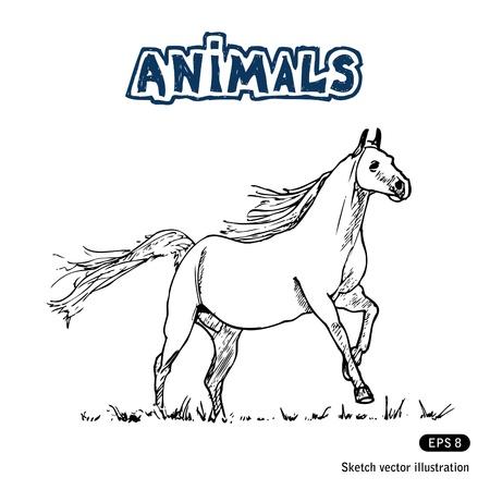 Mano tirado por caballos aislados en blanco