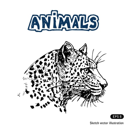 Jaguar  Hand drawn isolated on white Illustration