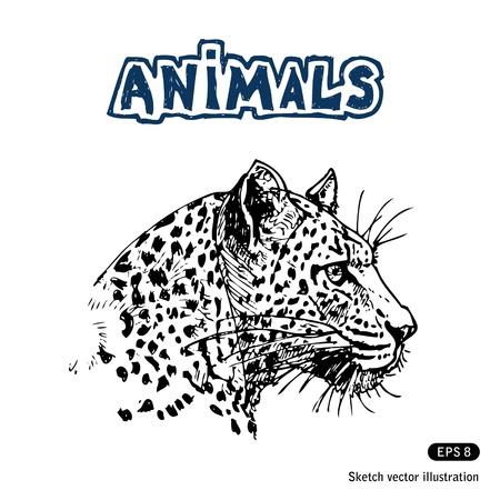 jaguar: Jaguar Getrokken op wit wordt geïsoleerd Stock Illustratie
