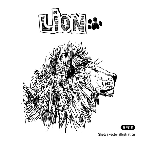 Lion  Hand drawn isolated on white Vector