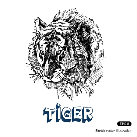 Tiger  Hand drawn vector isolated on white Vector