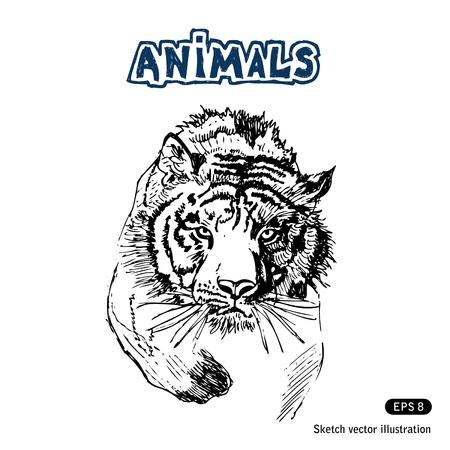 Tiger Hand getrokken vector op wit wordt geïsoleerd Vector Illustratie
