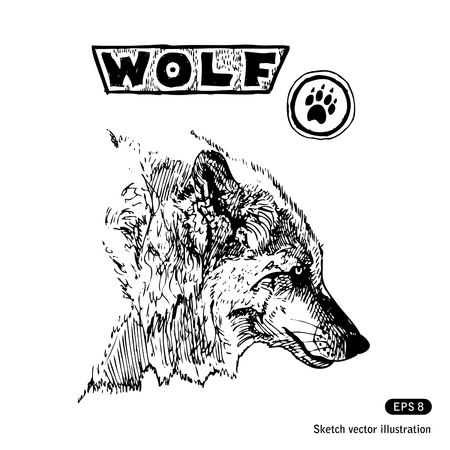 head protection:   Wolf  Hand drawn vector isolated on white