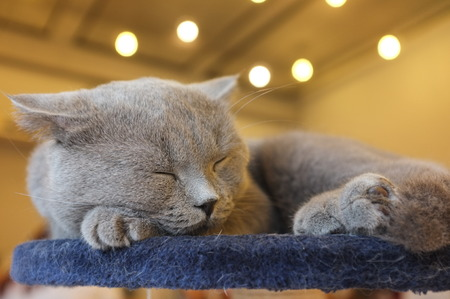 moggy: Animal. Cat sleeping on table. Stock Photo
