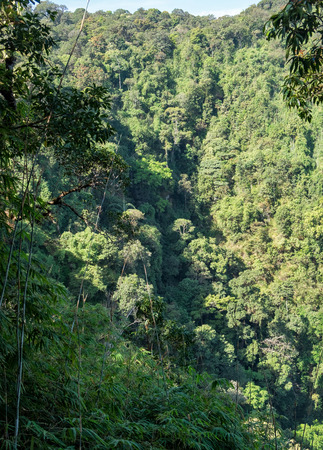 tropical evergreen forest: tropical evergreen forest in thailand , vertical Stock Photo