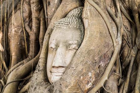 preferable: Buddha head statue inside the bodhi tree