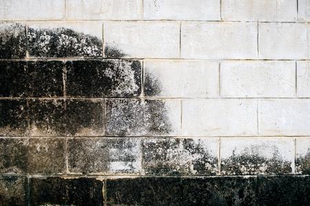 lichen: Wall white brick dirty lichen stain wayside