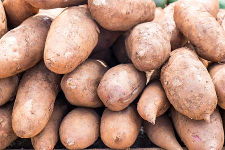 yacon: Yacon fruit herb healthy medicine salutary