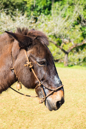 mule: Mule brown graze side angle and chinese plum background