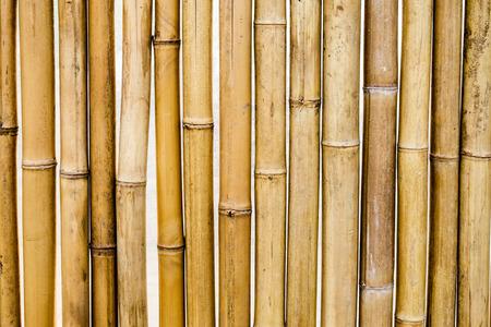 segmentar: Bamboo dry yellow segment pattern Foto de archivo