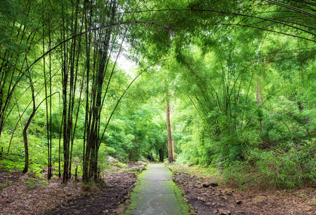 hellfire: Tropical rain forest route green bright in rainy season at hellfire pass, kanchanaburi, thailand