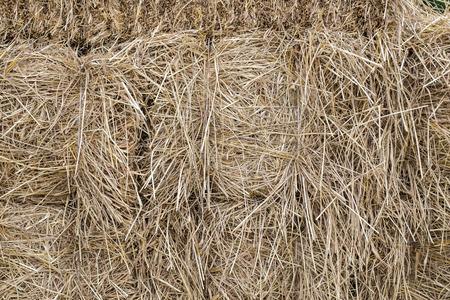 fodder: Straw stack fodder texture background