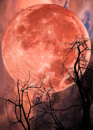 Red big moon and tree silhouette on dramatic sky