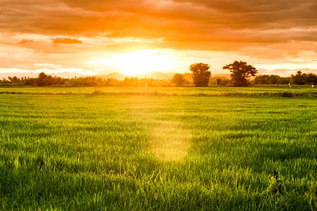 Rice field at twilight sunset, light shining on mountain