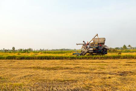 harvesters harvesting rice in gold fields