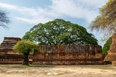 Temple ancient ruins with tree in place of worship famous at ayutthaya,thailand