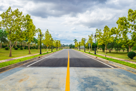 Road way with tree yellow and pole light orderly Stock Photo