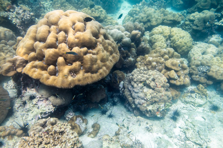 Big coral reef colony with fish in lipe andaman sea Stock Photo