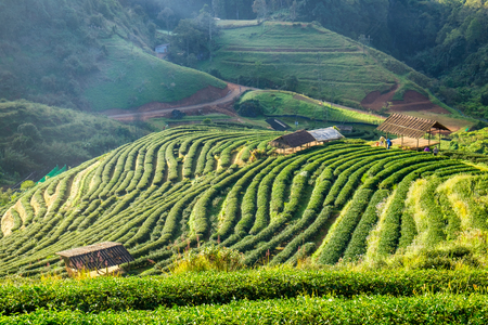 Scenic landscape cottage in valley tea plantation at chaing mai Stock Photo