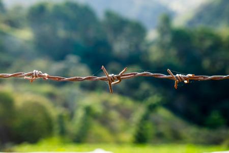 Wire coil rust cobweb hung in farm background