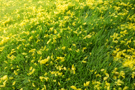 Golden yellow flower fall on grass